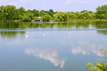 remoteness: Three white swans floats in the middle of the lake in lovely summer day Stock Photo