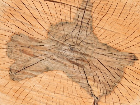 transverse: Transverse section of wooden logs with damaged central part by rot Stock Photo