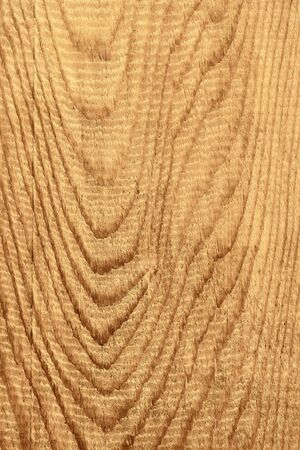 longitudinal: Detailed coarse structure of longitudinal section of wooden board with annual rings, sepia