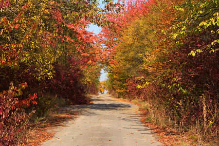 empedrado: Narrow rural paved road among colourful autumn trees