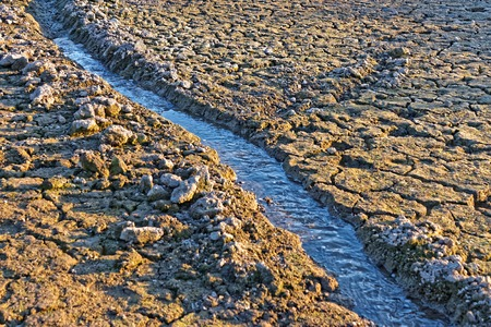 viable: Small water stream flowing in the channel on dried cracked earth in hot summertime