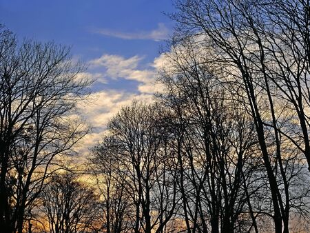 Tops of trees on the background of evening sky in the springtime Stock Photo