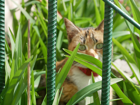 Cat concealed in the grass behind the green metal fence