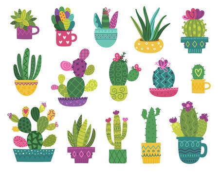 Cute cactus and succulent Vektorové ilustrace