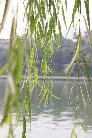 riverside: Riverside