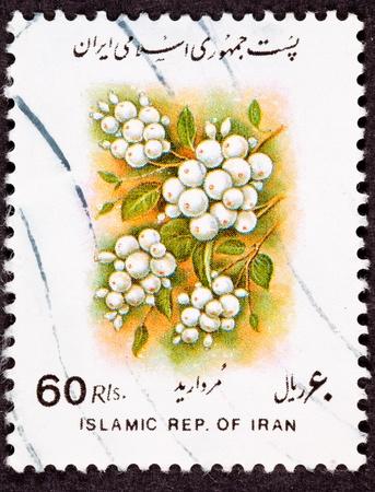 ブッシュ ナナカマド glabrescens ホワイト実ったナナカマドにイラン切手房の白い果実が取り消されました