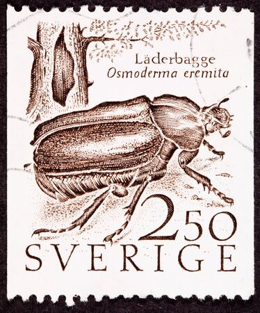 canceled: Canceled Swedish Postage Stamp showing a Hermit BeetleOsmoderma EremitaLäderbaggen next to a hollow tree.  The beetle is typically found inside hollow trees. Stock Photo