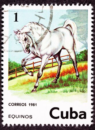 spirited: Canceled Cuban Postage Stamp Majestic White Horse Standing in Pasture