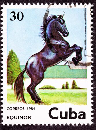 canceled: Canceled Cuban Postage Stamp Black Horse Rearing Up in Field Stock Photo