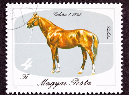 Hungarian Gidran Horse Breed Isolated Background