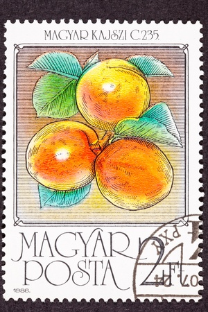 canceled: Canceled Hungarian Postage Stamp Ripe Orange Apricots On Tree Branch