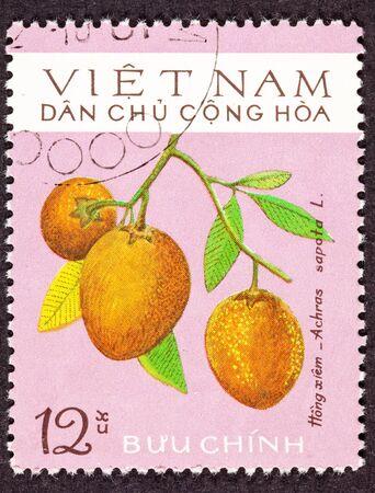 viet nam: Ripe sapodilla (Manilkara Achras Fruit Tree, Formerly achras sapota.  Known in Vietnamese as xa p� ch� or hong xiem