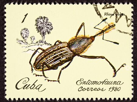weevil: Postage stamp showing the weevil rhina oblita