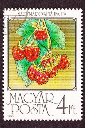 canceled: Canceled Hungarian Postage Stamp Hanging Red Raspberries Fruit on Bush