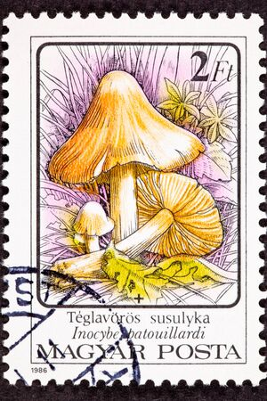 commemorative: Hungarian stamp showing a poisonous mushroom Inocybe erubescens formerly Inocybe patouillardi growing in natural environment. Stock Photo