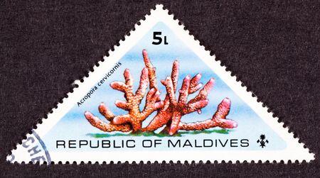 삼각형 모양의 몰디브 우표 핑크 박쥐 Acropora Cervicornis 산호입니다.