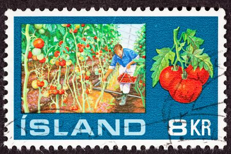 canceled: Canceled Icelandic Postage Stamp showing a man picking tomatoes inside a greenhouse from tomato vines Stock Photo