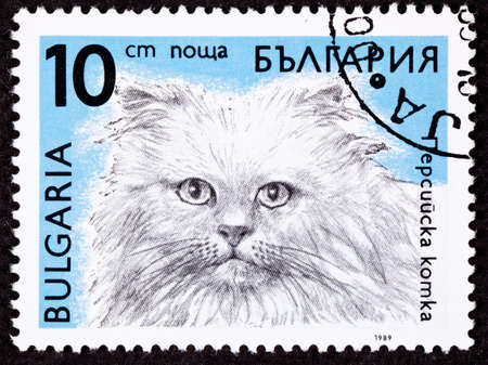 longhaired: Bulgarian cat breed stamp series - Longhaired Himalayan Stock Photo
