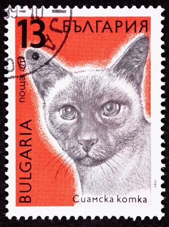 siamese: Canceled Bulgarian Postage Stamp Shorthaired Siamese Cat Breed