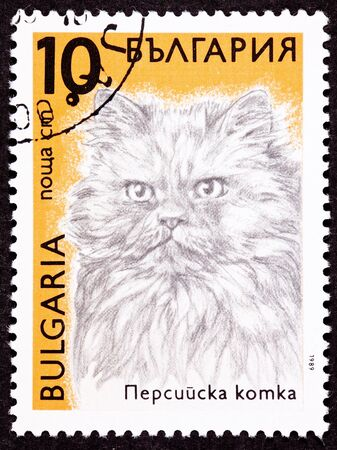 longhaired: Canceled Bulgarian Postage Stamp Fuzzy Longhaired Persian Cat Breed Stock Photo