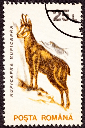 mountainside: Chamois Goat, Rupicapra Rupicapra, Standing Mountainside