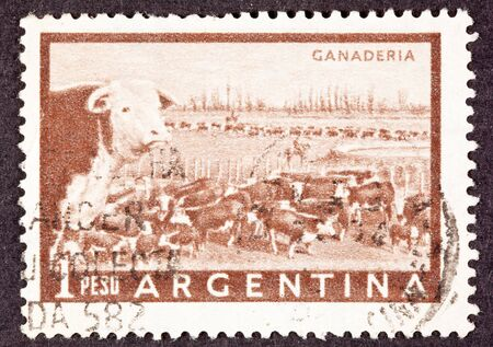 herding: Heard of beef cattle in the Argentinean pampas being herded through a gate in a fence