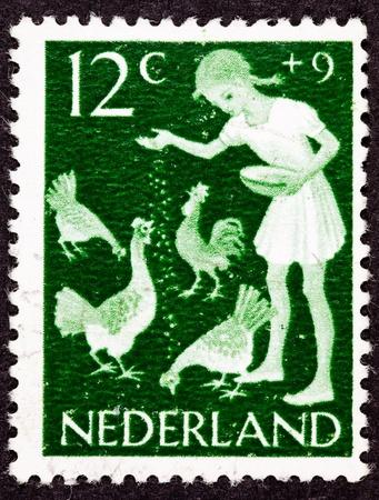 dutch girl: Girl feeding grain to chickens.