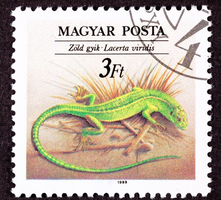 lacerta: Canceled Hungarian Postage Stamp Brown Green Sand Lizard, Lacerta Agilis Stock Photo