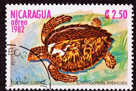 nearly: Hawksbill Sea Turtlem Eretmochelys Imbricata, hunted nearly to extinction. Stock Photo