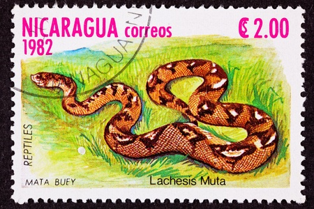 fullbody: Canceled Nicaraguan Postage Stamp Bushmaster Snake Venomous Pitviper Lachesis Muta Stock Photo