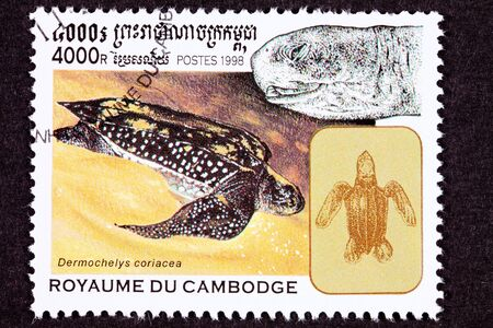 lbs: Endangered swimming Leatherback Turtle, Dermochelys coriacea can grow to 6 feet in length and weigh 1000 lbs.