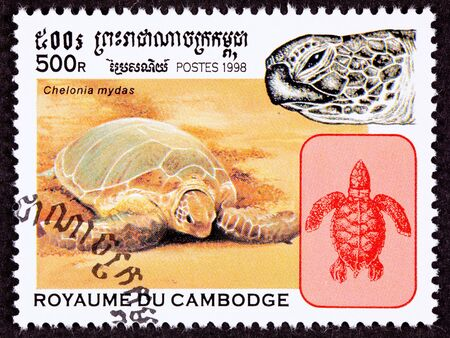 cambodian: Endangered Green Sea Turtle, Chelonia mydas crawling on the beach. Stock Photo
