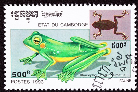 crouching: Wallaces Flying Frog,  Rhacophorus Nigropalmatus.  Also known as the Abah River Flying Frog Stock Photo