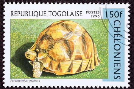 fullbody: Tortoise known as Angonoka, Ploughshare, or Madagascar Tortoise, Geochelone Yniphora.  Formerly Astrochelys yniphora