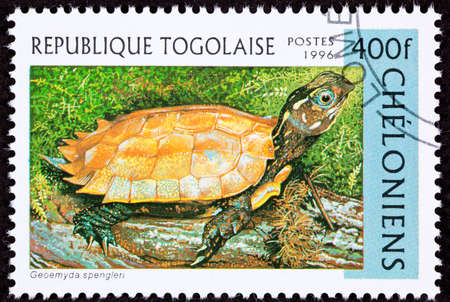 fullbody: Endangered Black-Breasted Hill turtle, also known as the Vietnamese Leaf turtle, Geoemyda spengleri.