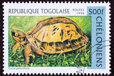 fullbody: Endangered Vietnamese box turtle, Indochinese box turtle, or Flowerback box turtle,  Cuora galbinifrons