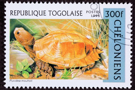 fullbody: Endangered orange colored Keeled Box Turtle, Pyxidea mouhotii
