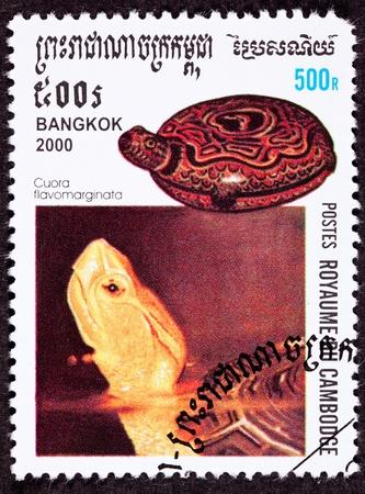 Endangered Chinese Box Turtle Cuora Flavomarginata Also Know