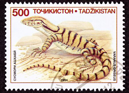 Desert Monitor Lizard, Varanus griseus standing on bare rocks 版權商用圖片