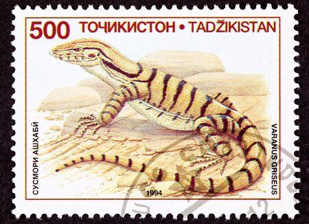 Desert Monitor Lizard, Varanus griseus standing on rocks Stock Photo