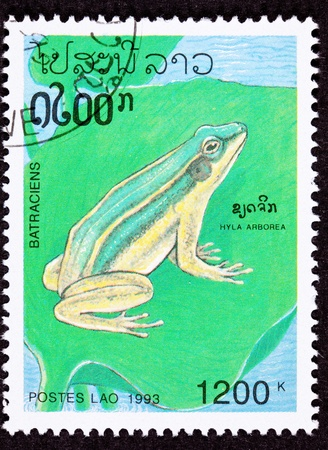 European Tree Frog, Hyla Arborea, sitting on lily pad.