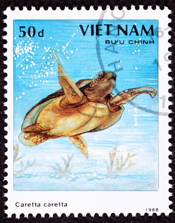 viet nam: Endangered Loggerhead Sea Turtle, Caretta caretta swimming in the ocean.  Note that Istocks title naming convention prohibits repeated words, so I cant list the full name accurately in the title. Stock Photo