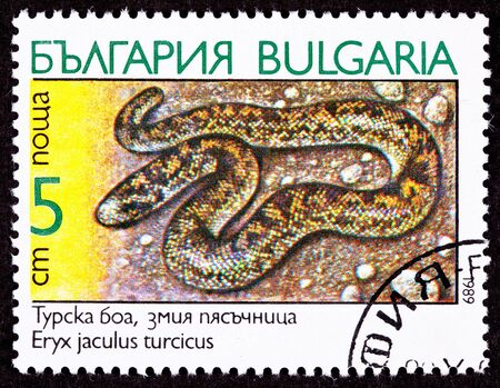boa: Javelin Sand Boa Constrictor Snake, Eryx jaculus