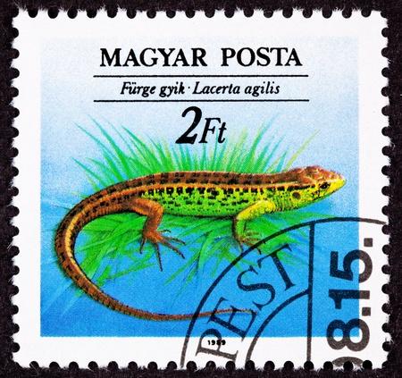 magyar: Canceled Hungarian Postage Stamp Brown Green Sand Lizard, Lacerta Agilis Stock Photo