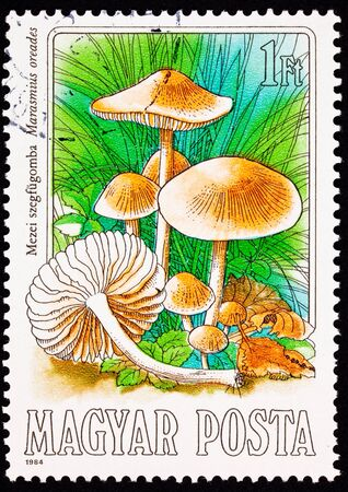 scotch: Scotch Bonnet, Marasmius oreades, also known as the Fairy Ring Mushroom as it typically grows in outwardly spreading rings.  European folklore holds that these were marks where fairies entered and left this world for one of their own.   It is reportedly q Stock Photo