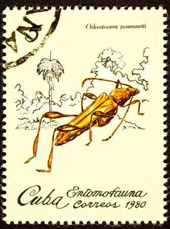 apparently: Cricket Like Insect Odontocera Josemartii.  Apparently named after Jos� Mart� Cuban national hero and author.