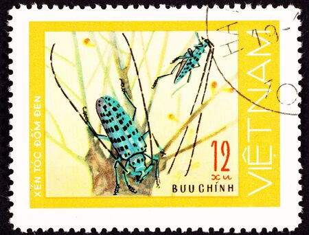 viet nam: Pair of green spotted beetles with long antenna on leafless plants