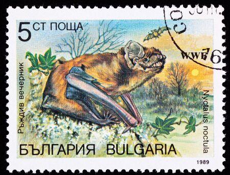 Common Noctule bat, Nyctalus noctula at sunset.