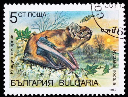echolocation: Common Noctule bat, Nyctalus noctula at sunset.