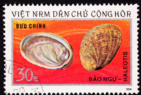 viet nam: Abalone Shells from the family Haliotis showing the Mother of Pearl inside.